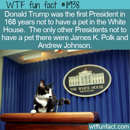 WTF Fun Fact - Presidents Without Pets