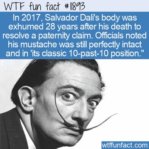 WTF Fun Fact - Salvador Dali's Beard 28 Years Later