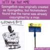 WTF Fun Fact – SpongeBoy
