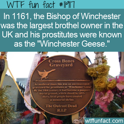 WTF Fun Fact - Winchester Geese