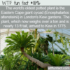 WTF Fun Fact – World's Oldest Potted Plant