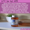 WTF Fun Fact – Free Local Honey With Your Car Service