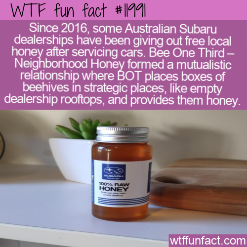 WTF Fun Fact - Free Local Honey With Your Car Service