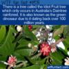 WTF Fun Fact – Idiot Fruit Tree