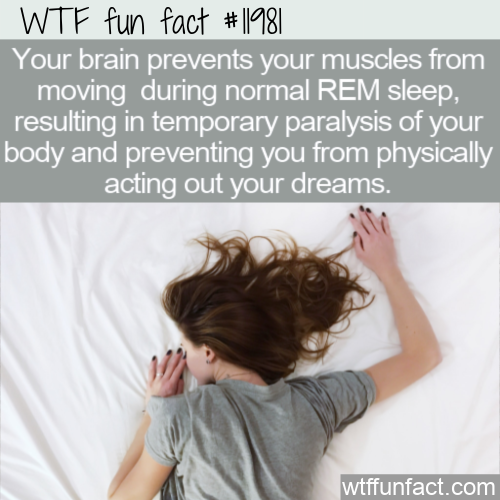 WTF Fun Fact - Paralysis During REM Sleep