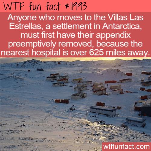 WTF Fun Fact - Villas Las Estrellas