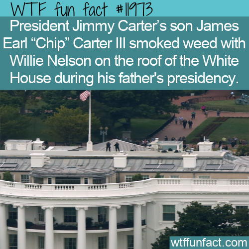 WTF Fun Fact - Willy And Chip On The Roof