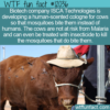 WTF Fun Fact – Cows With Human-Scented Cologne