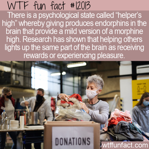 WTF Fun Fact - Helper's High
