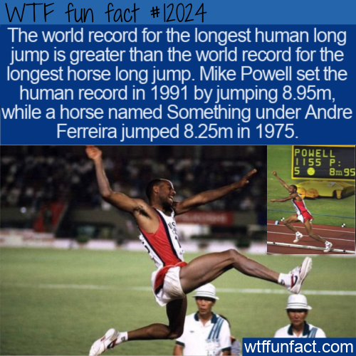 WTF Fun Fact - Humans Jump Farther Than Horses