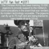 WTF Fun Fact – Modern War Messenger Pigeons