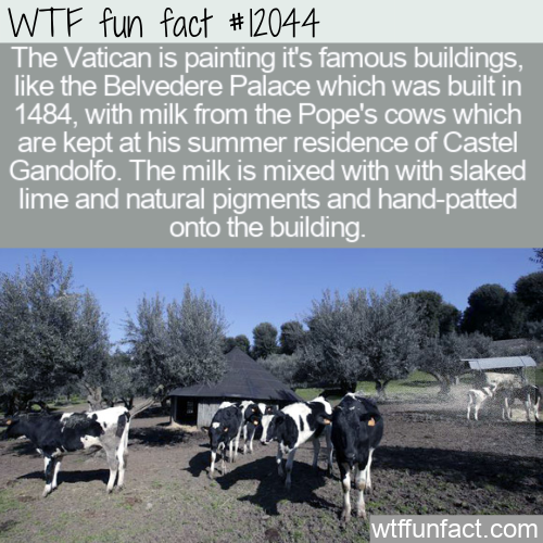 WTF Fun Fact - Paint From The Pope's Cow's Milk