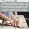 WTF Fun Fact – Pythagoras' Weird Commune Rules