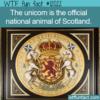 WTF Fun Fact -Scotland's National Animal