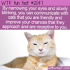 WTF Fun Fact – Slow Blink To Communicate With Cats