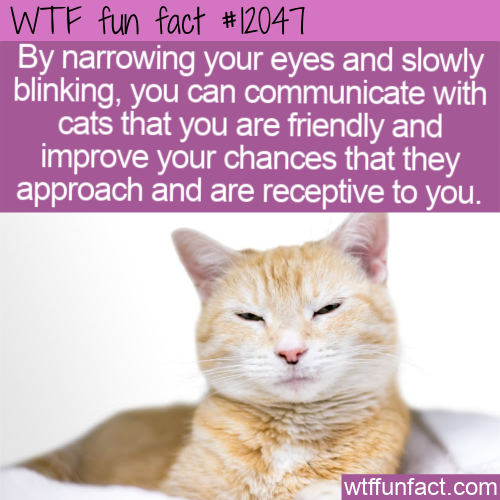 WTF Fun Fact - Slow Blink To Communicate With Cats