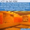 WTF Fun Fact – Austrian Beer Pools