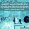 WTF Fun Fact – Clams Testing The Water