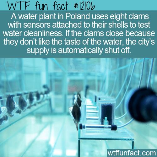 WTF Fun Fact - Clams Testing The Water