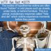 WTF Fun Fact – Hide And Die