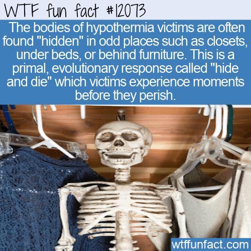 WTF Fun Fact - Hide And Die