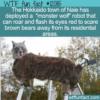 WTF Fun Fact – Hokkaido's Monster Wolf Vs Brown Bears