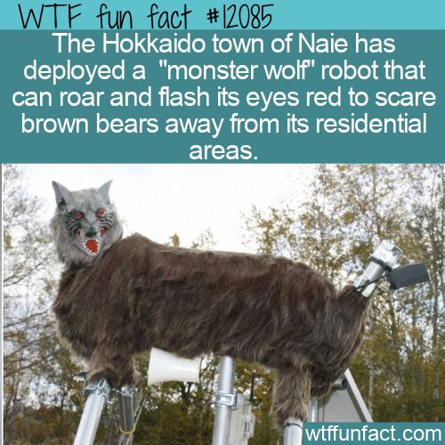 WTF Fun Fact - Hokkaido's Monster Wolf Vs Brown Bears
