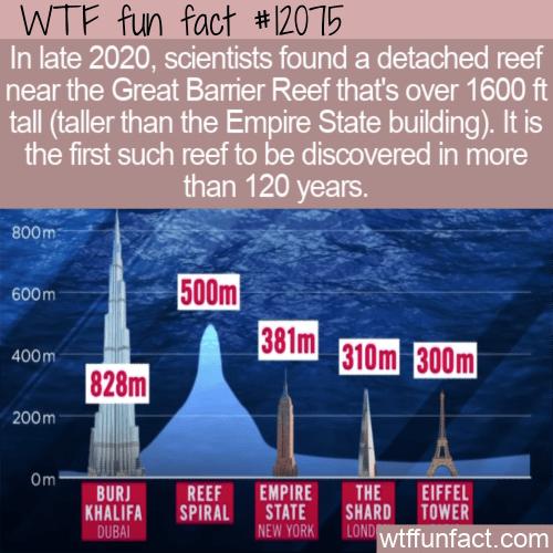 WTF Fun Fact - Massive Detached Reef Near Australia
