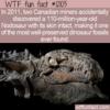 WTF Fun Fact – Nodosaur Mummy