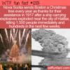 WTF Fun Fact – Nova Scotia Sends Boston A Christmas Tree Yearly