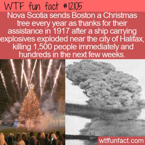 WTF Fun Fact - Nova Scotia Sends Boston A Christmas Tree Yearly