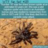 WTF Fun Fact – Number 16