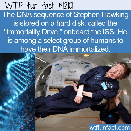 WTF Fun Fact - Stephen Hawking On The Immortality Drive