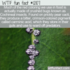 WTF Fun Fact -The Red Color From Cochineal Insects