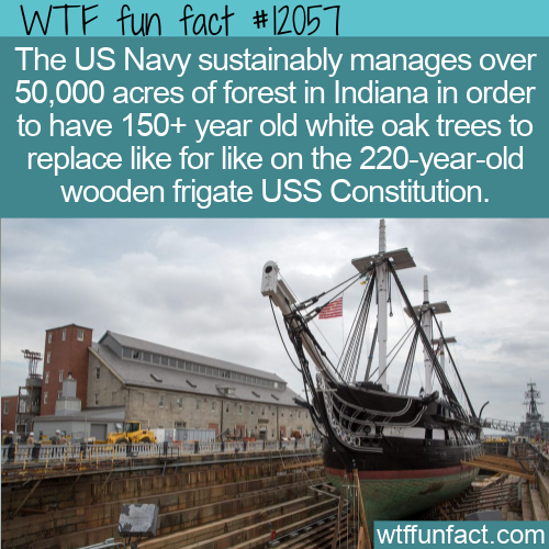 WTF Fun Fact - US Navy Forest Of Old White Oaks