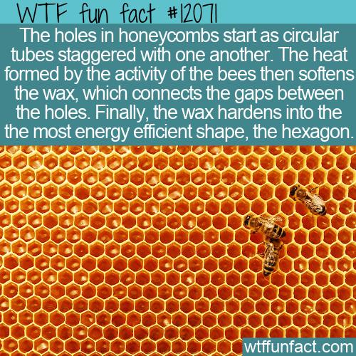 WTF Fun Fact - Why Hexagon Honeycombs
