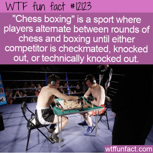 WTF Fun Fact - Chess Boxing