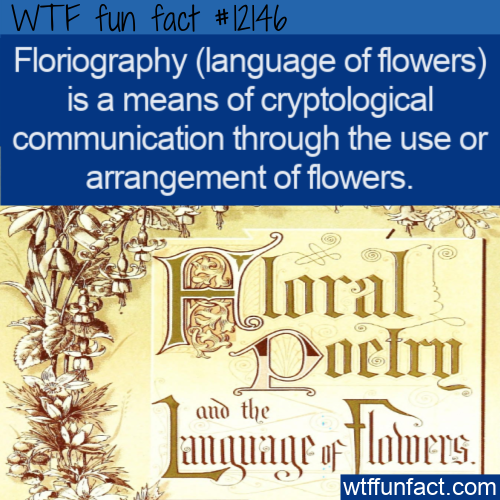 WTF Fun Fact - Floriography