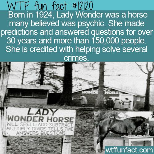 WTF Fun Fact - Lady Wonder