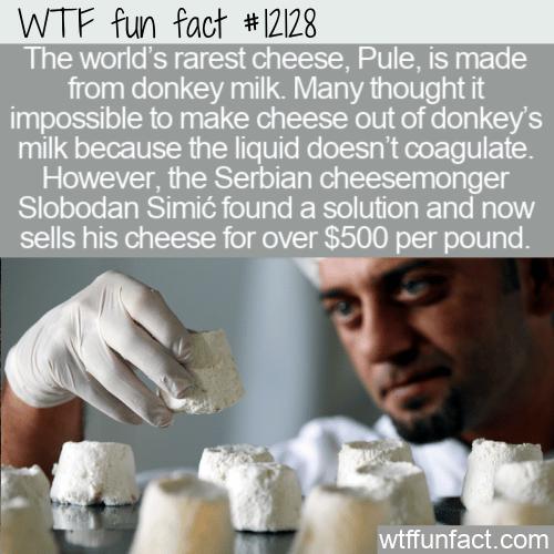 WTF Fun Fact - Pule