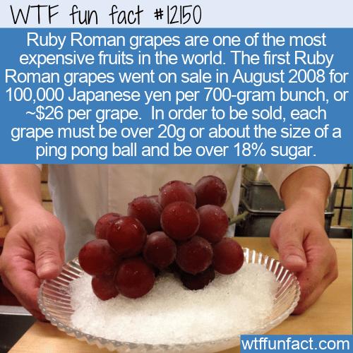 WTF Fun Fact - Ruby Roman Grapes