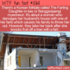 WTF Fun Fact – The Farting Daughter-in-Law