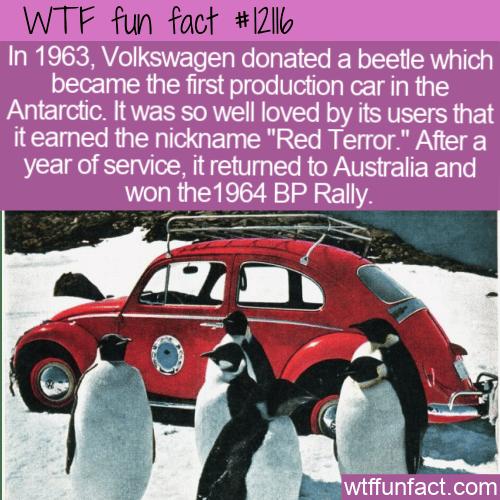 WTF Fun Fact - The Red Terror