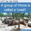 WTF Fun Fact – A Crash Of Rhinos