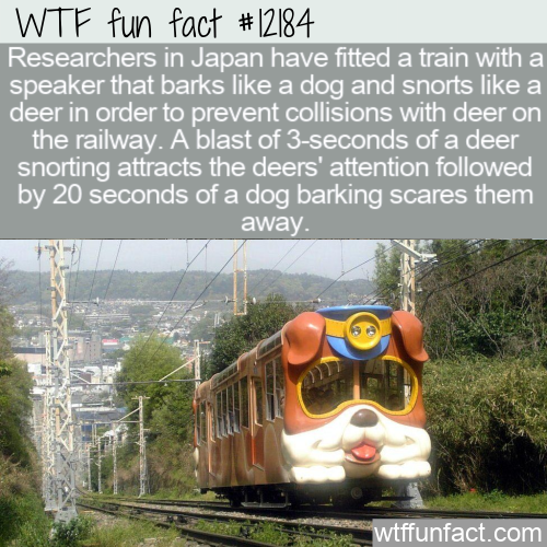 WTF Fun Fact - Barking and Snorting Train