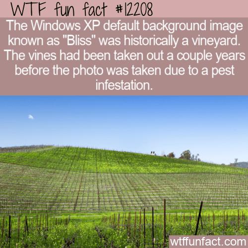 WTF Fun Fact - Bliss Historically A Vineyard