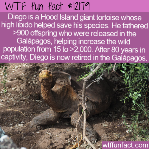 WTF Fun Fact - Diego Saves His Species