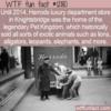 WTF Fun Fact – Harrods Pet Kingdom