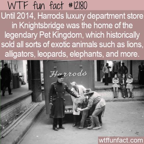 WTF Fun Fact - Harrods Pet Kingdom