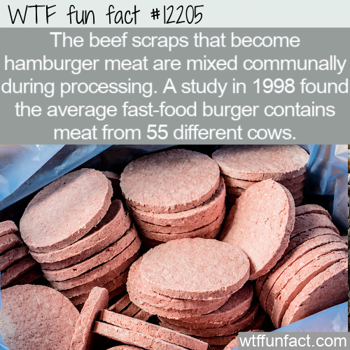 WTF Fun Fact - How Many Cows Does It Take To Make A Burger